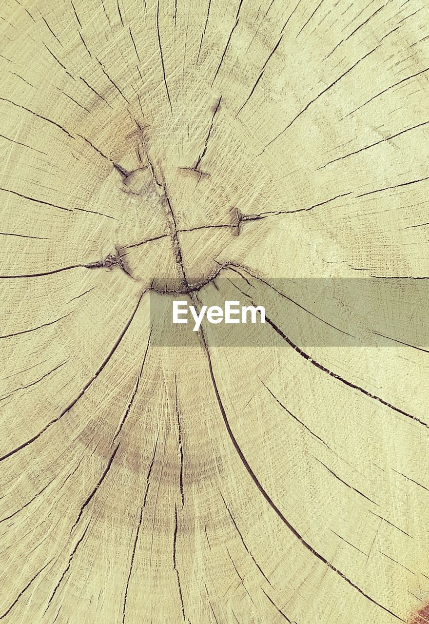 backgrounds, wood - material, textured, full frame, wood grain, cracked, pattern, brown, directly above, tree ring, nature, close-up, concentric, no people, day, outdoors, tree