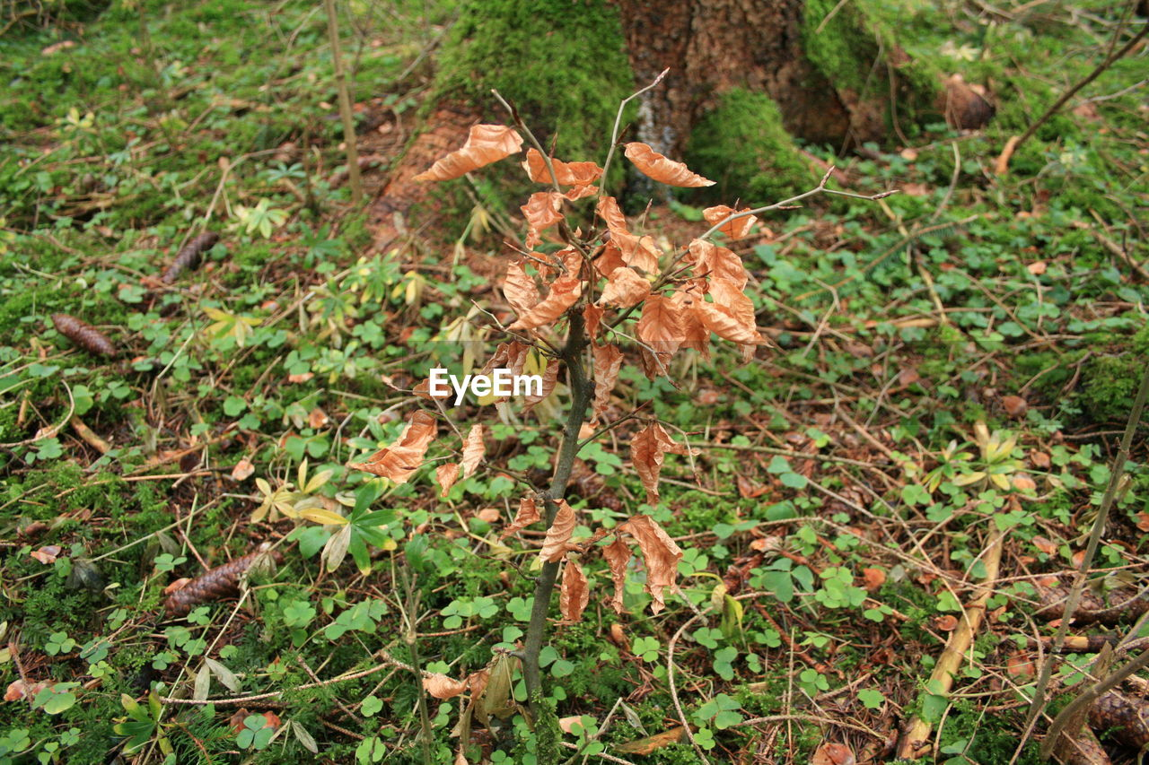 nature, plant, growth, leaf, no people, outdoors, day, close-up, grass, beauty in nature, tree
