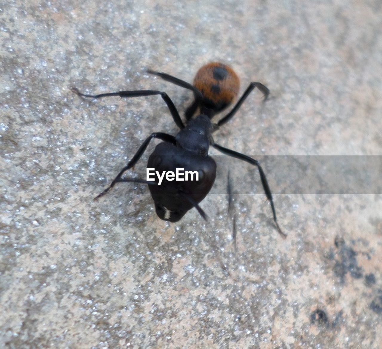 insect, one animal, animal themes, no people, animals in the wild, close-up, outdoors, day, nature