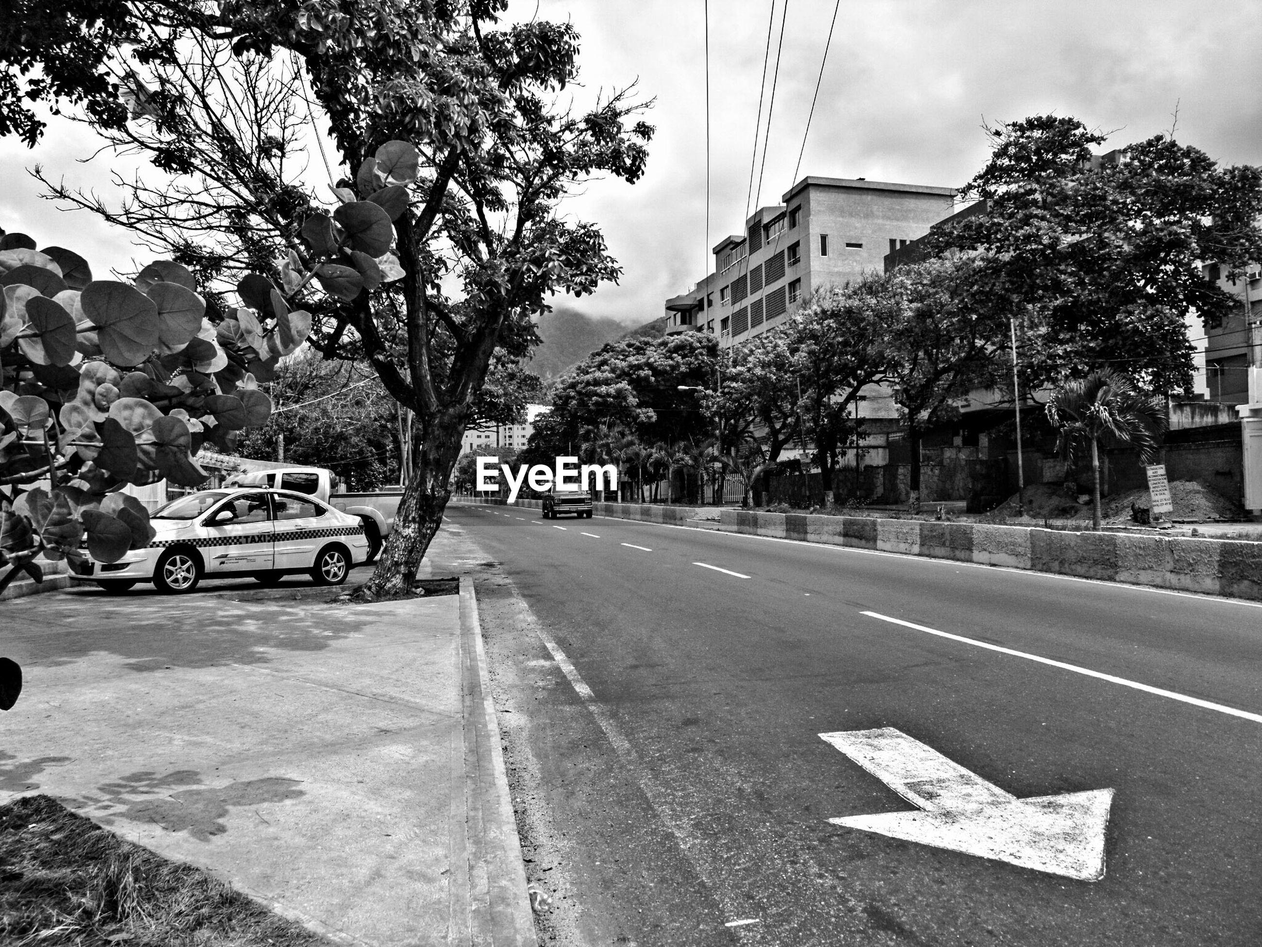 Arrow symbol on street amidst trees