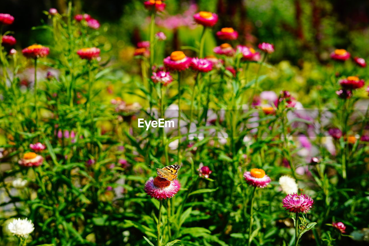 flower, flowering plant, freshness, plant, beauty in nature, growth, fragility, vulnerability, flower head, petal, nature, no people, inflorescence, animal wildlife, day, close-up, focus on foreground, animal themes, green color, animals in the wild, pollination, purple