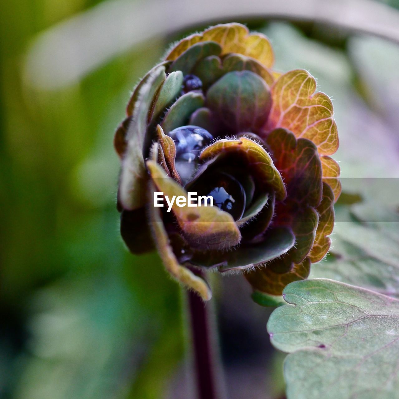 growth, plant, close-up, beauty in nature, flower, freshness, flowering plant, fragility, focus on foreground, nature, vulnerability, no people, leaf, day, plant part, selective focus, flower head, outdoors, petal, inflorescence