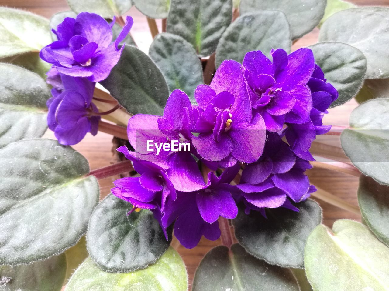 flower, purple, petal, nature, fragility, beauty in nature, freshness, flower head, growth, plant, day, no people, close-up, leaf, outdoors