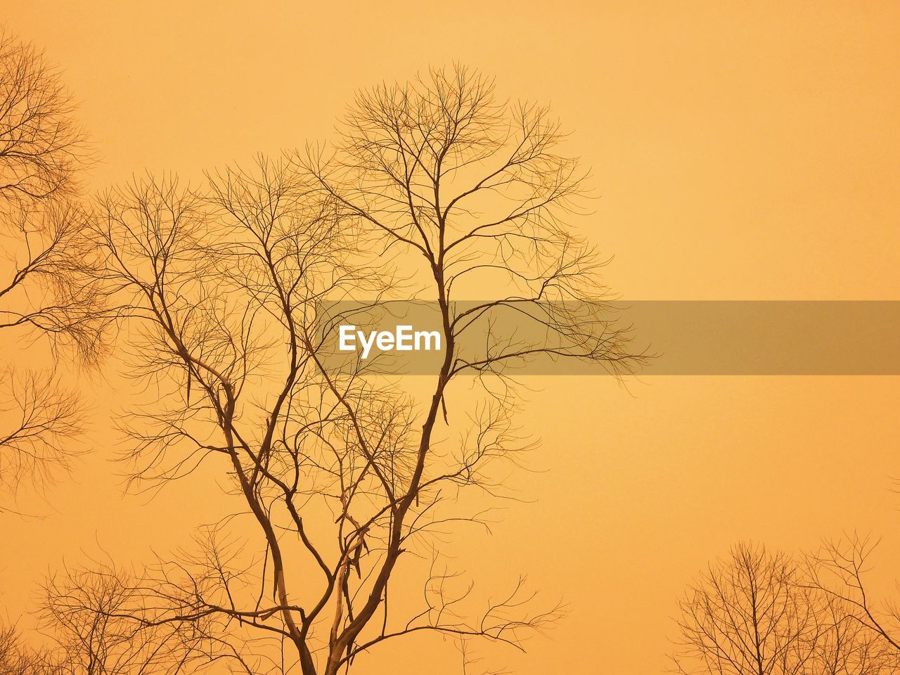 tree, bare tree, sunset, tranquility, sky, branch, beauty in nature, no people, plant, scenics - nature, orange color, silhouette, nature, low angle view, tranquil scene, clear sky, outdoors, idyllic, non-urban scene