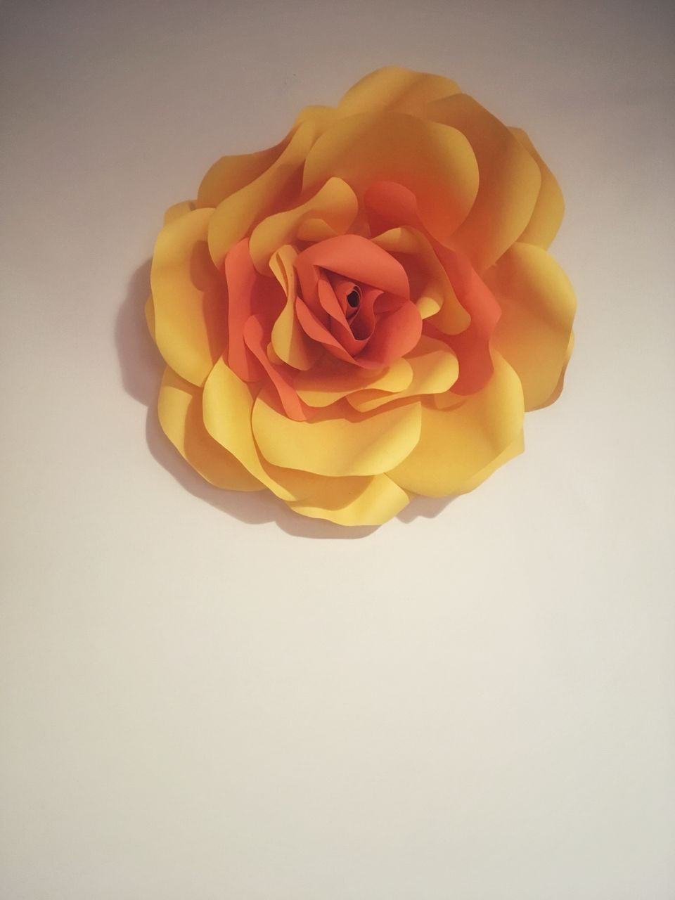 flower, flowering plant, beauty in nature, studio shot, plant, rose, petal, freshness, inflorescence, rose - flower, flower head, vulnerability, close-up, fragility, indoors, copy space, no people, yellow, white background, nature