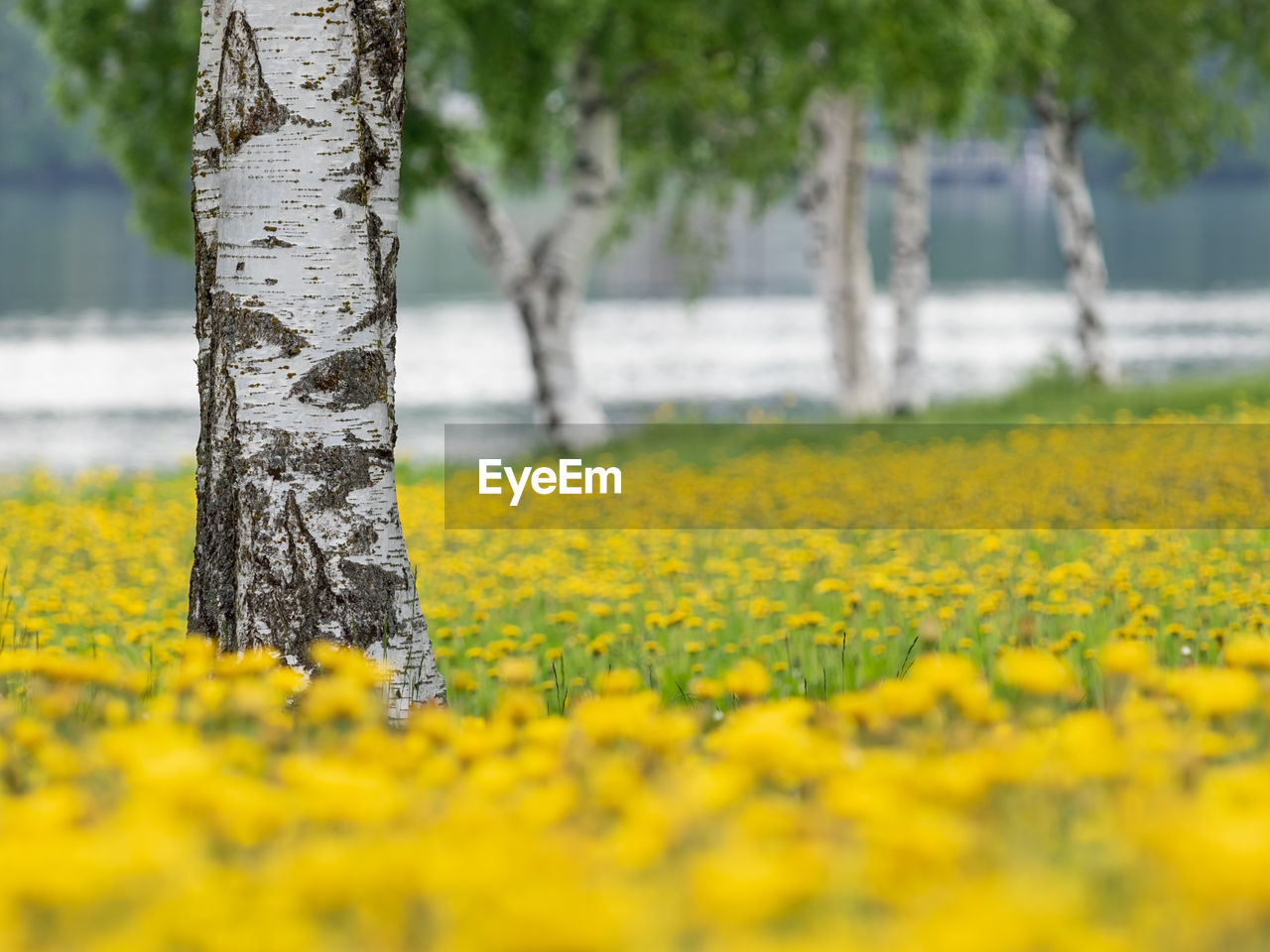 plant, yellow, tree trunk, trunk, growth, land, tree, flower, beauty in nature, nature, field, tranquility, landscape, flowering plant, no people, freshness, day, outdoors, selective focus, focus on foreground, springtime, lichen