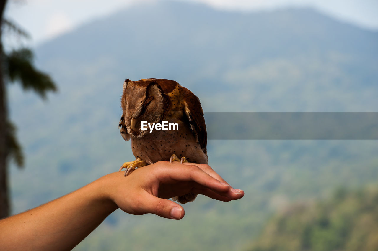 Close-up of owl perching on hand against mountain