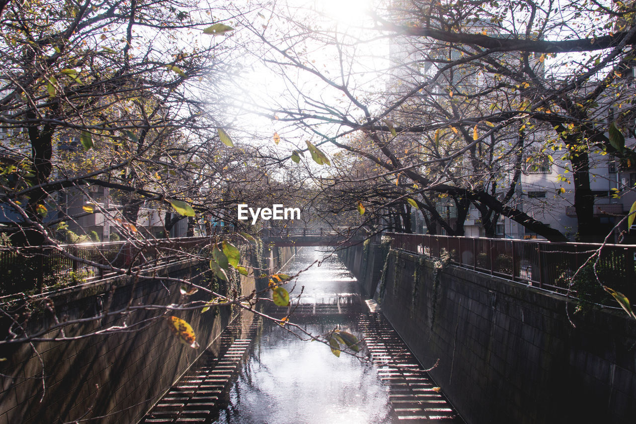 tree, river, branch, water, outdoors, day, no people, nature, footbridge, beauty in nature, architecture, sky