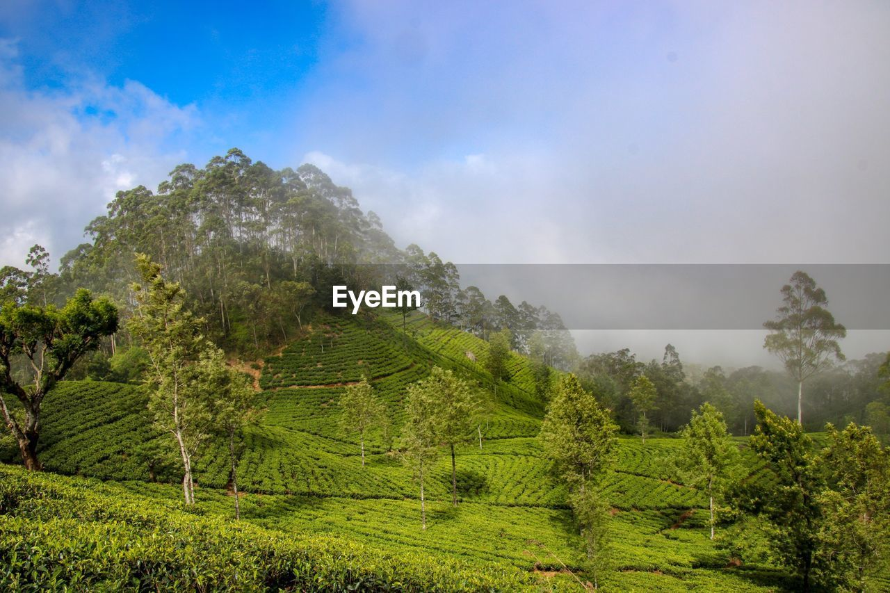 tree, sky, beauty in nature, plant, cloud - sky, green color, tranquility, tranquil scene, scenics - nature, growth, land, environment, landscape, nature, no people, non-urban scene, day, mountain, forest, idyllic, outdoors
