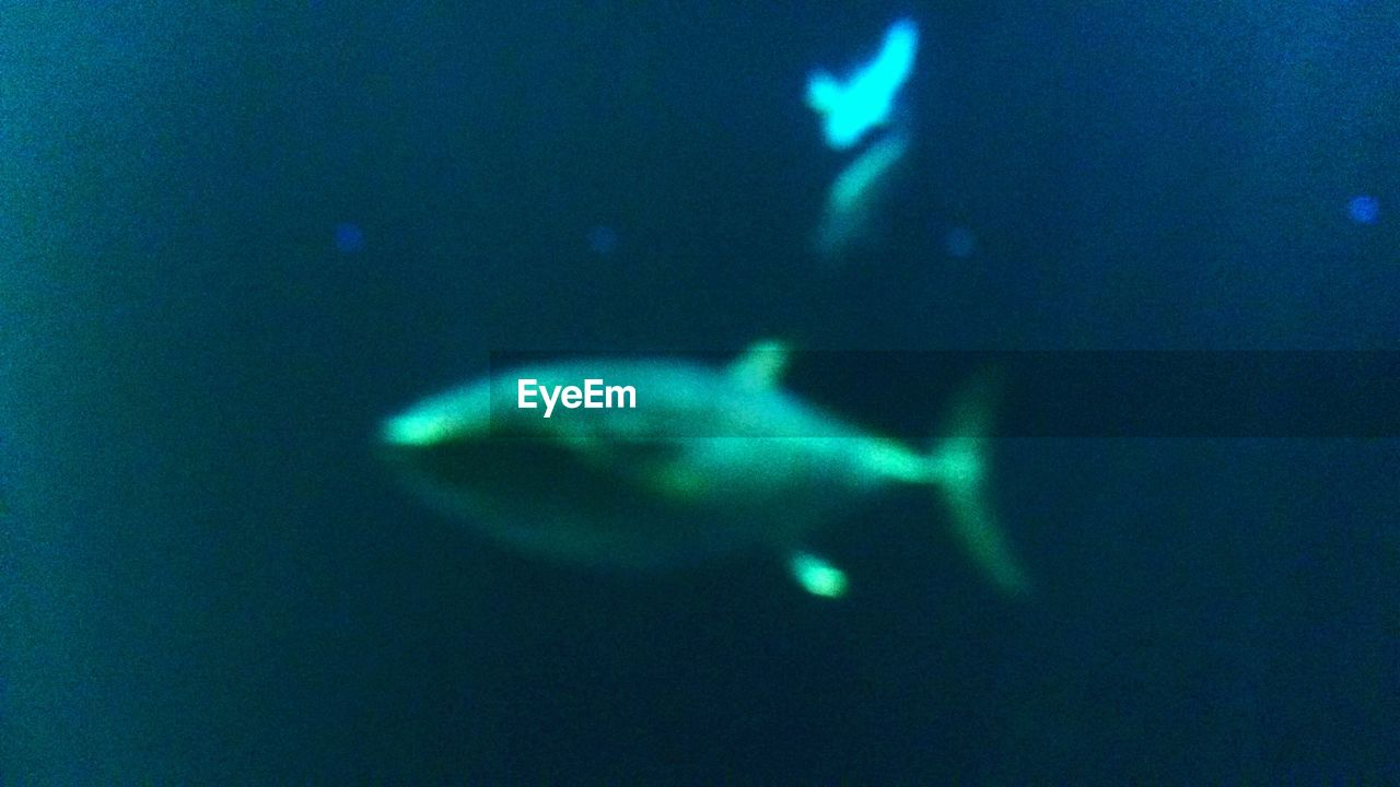 underwater, swimming, fish, sea life, wildlife, water, undersea, sea, aquarium, no people, nature, animal themes, close-up