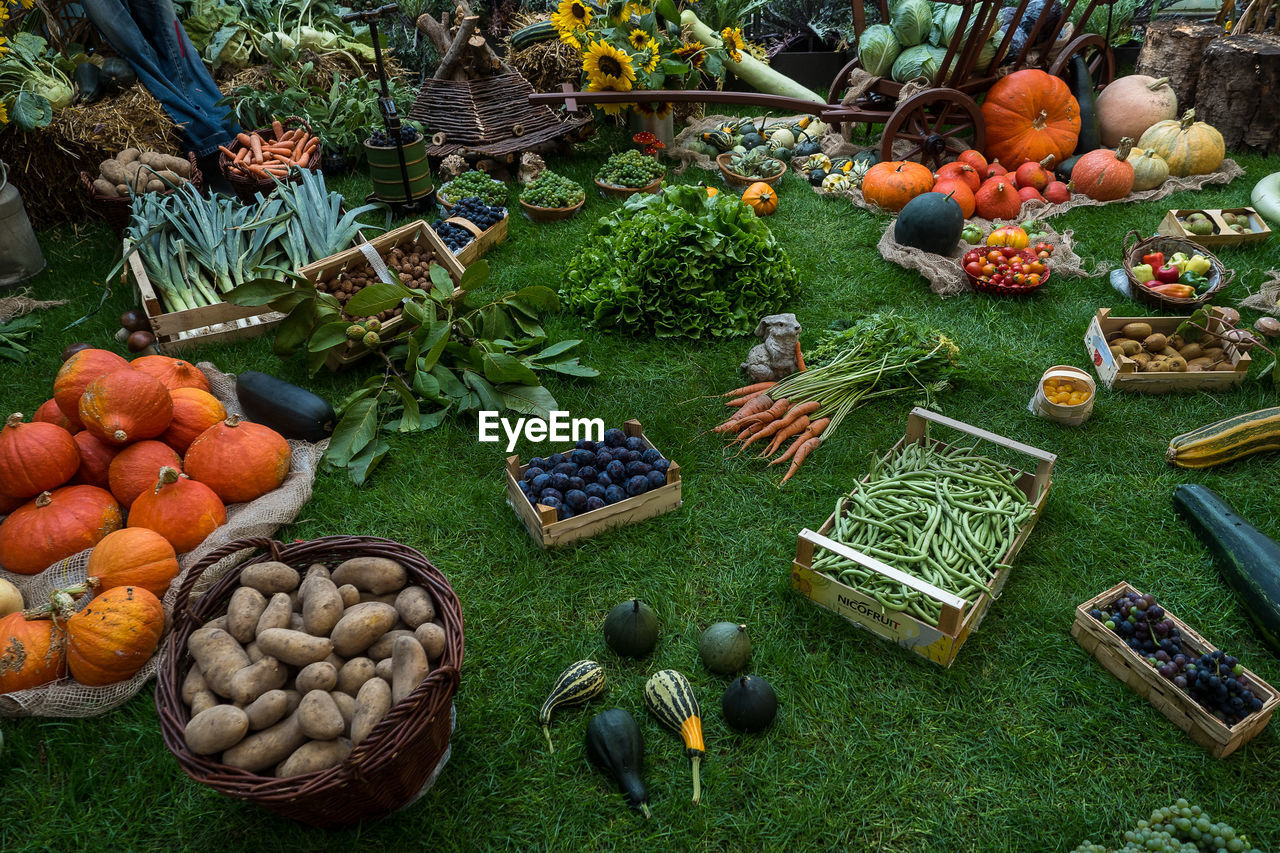basket, variation, vegetable, healthy eating, high angle view, choice, day, fruit, food, abundance, large group of objects, food and drink, freshness, no people, outdoors, grass, pumpkin, nature