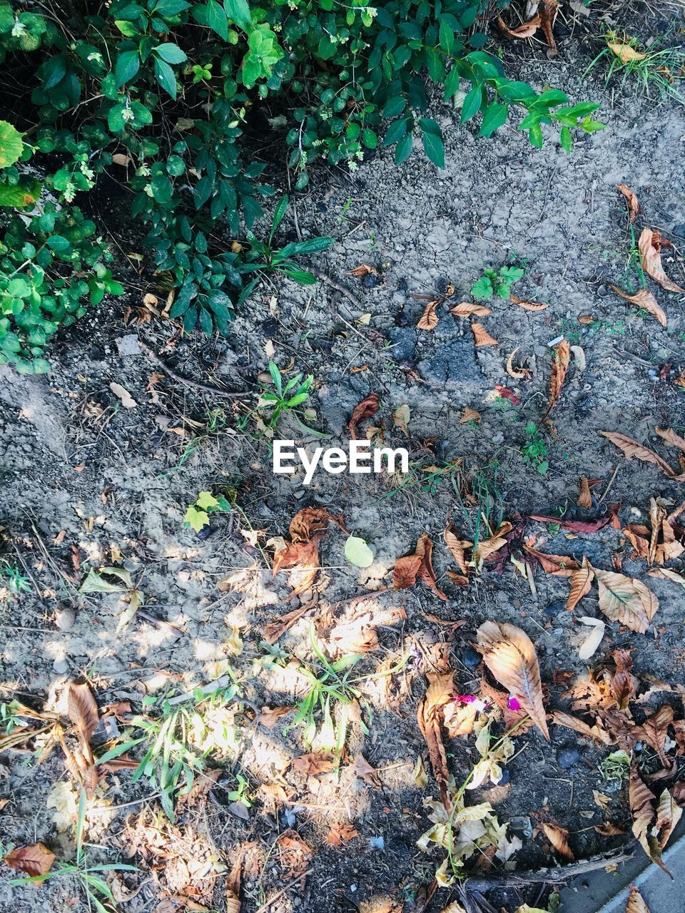land, leaf, nature, plant, plant part, high angle view, day, growth, no people, field, outdoors, dry, forest, green color, beauty in nature, falling, tranquility, tree, leaves, messy