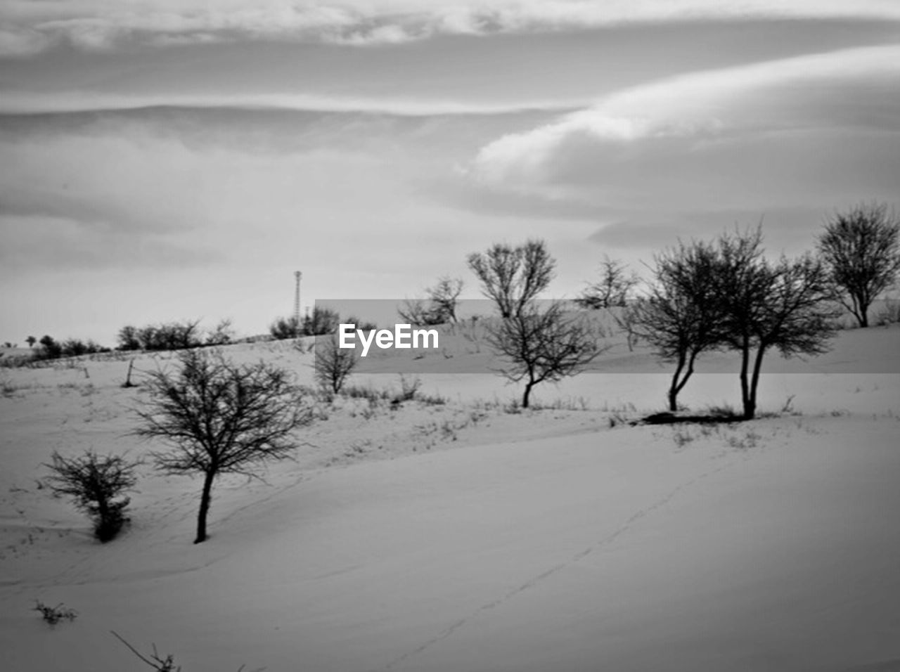 winter, snow, cold temperature, nature, tree, weather, landscape, sky, outdoors, field, beauty in nature, tranquil scene, scenics, tranquility, bare tree, cloud - sky, no people, day