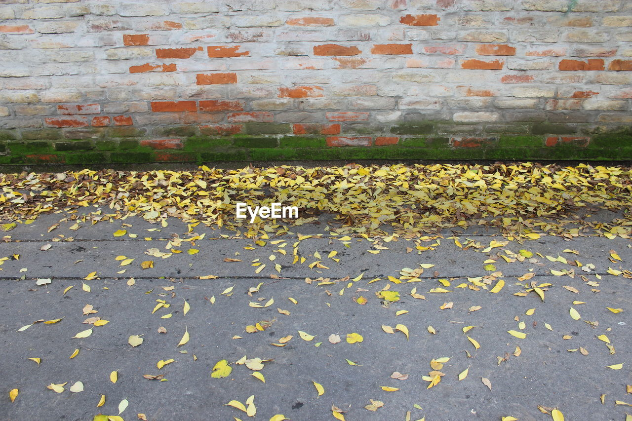autumn, leaf, change, yellow, day, no people, outdoors, nature, built structure, architecture, animal themes, close-up