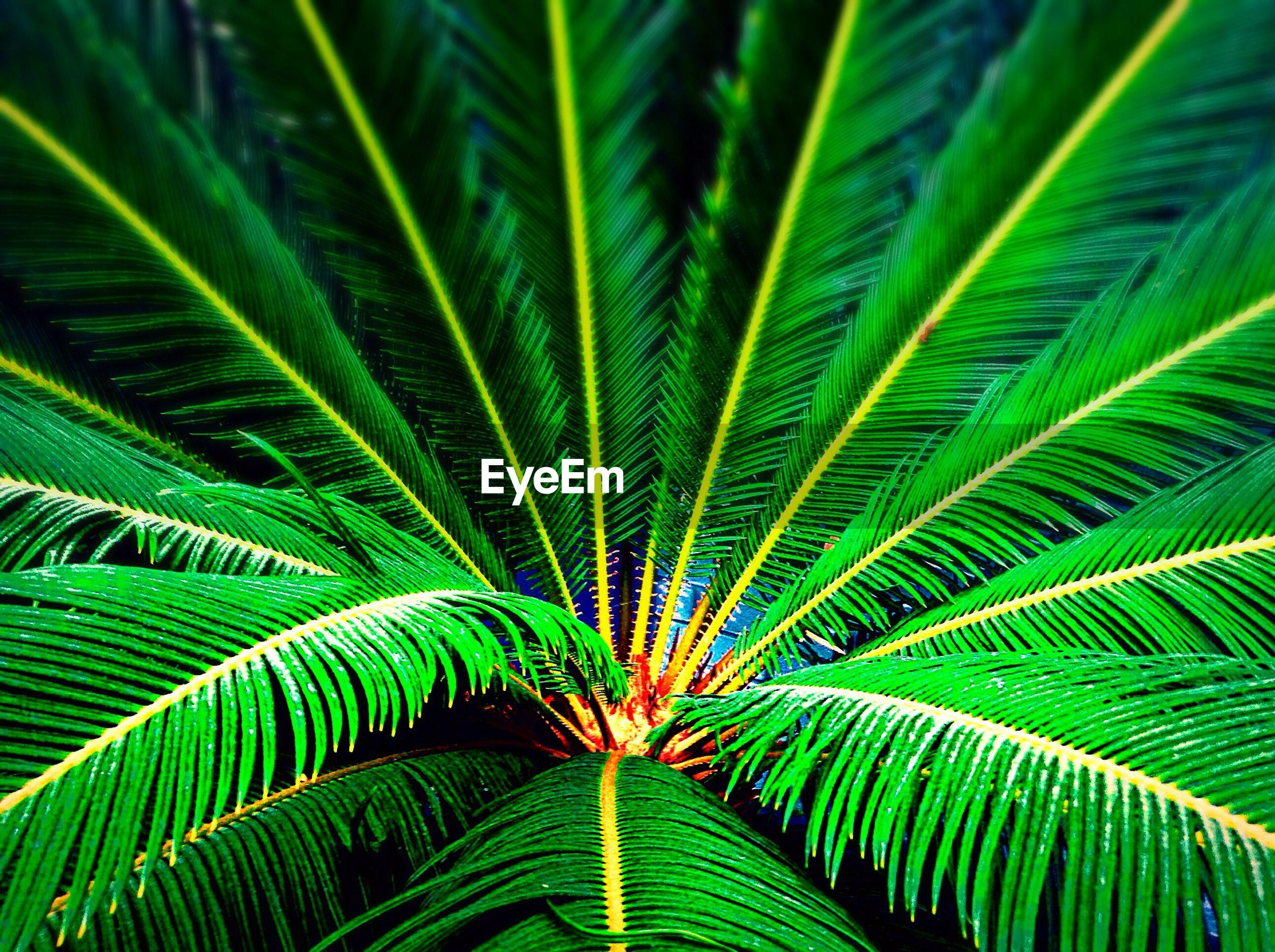 green color, leaf, growth, full frame, plant, nature, backgrounds, palm tree, fern, beauty in nature, natural pattern, close-up, green, palm leaf, lush foliage, outdoors, no people, day, leaves, tranquility, focus on foreground, botany, growing, selective focus, detail