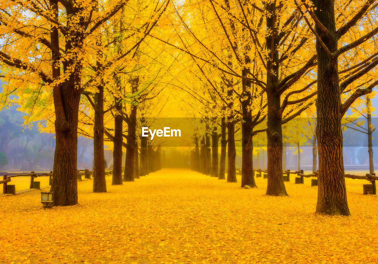 tree, plant, autumn, beauty in nature, yellow, treelined, the way forward, direction, tranquility, nature, tree trunk, tranquil scene, park, footpath, change, no people, scenics - nature, trunk, diminishing perspective, growth, outdoors, autumn collection