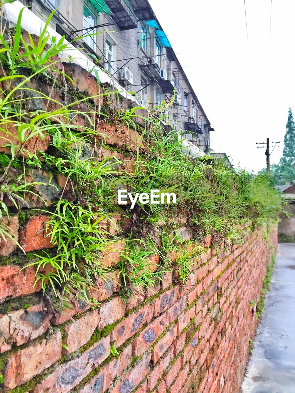 Plants Growing On Wall Id 85964162