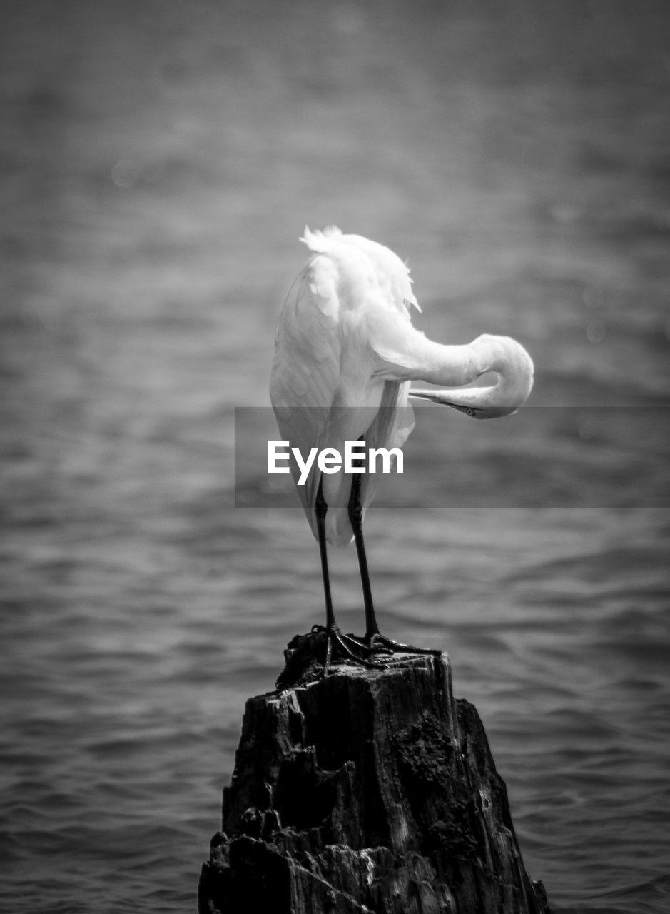 BIRD PERCHING ON ROCK AGAINST SEA