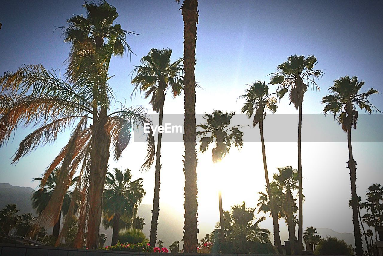 palm tree, tree, beauty in nature, sky, tree trunk, nature, no people, growth, outdoors, day, low angle view, tranquility, scenics, clear sky