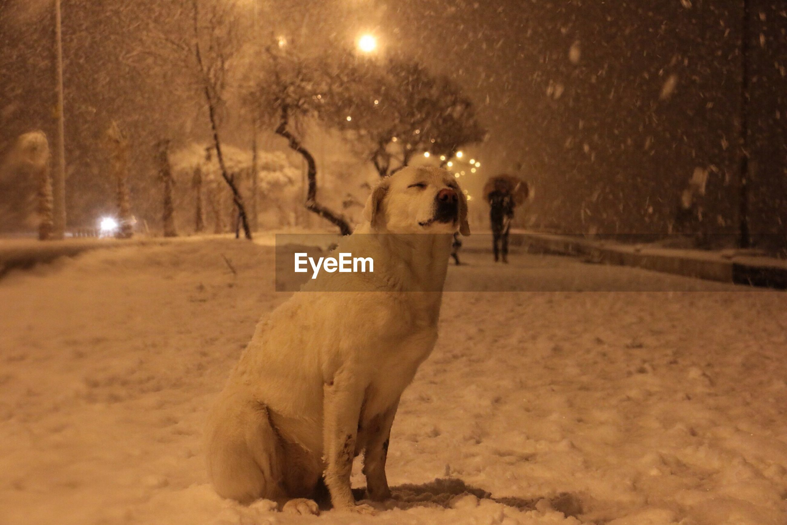 Dog sitting with eyes closed while enjoying snowfall on field