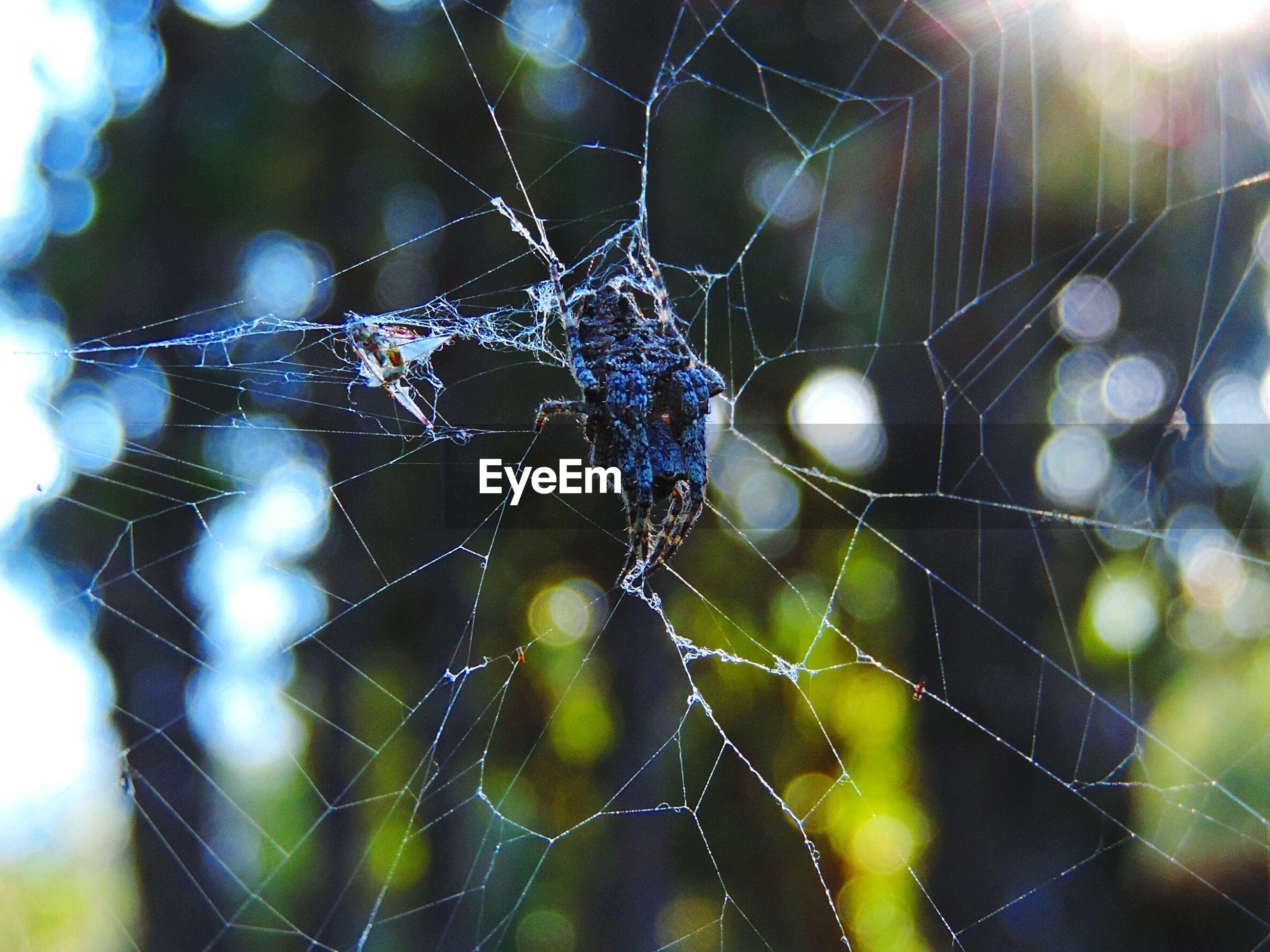 spider web, drop, focus on foreground, close-up, wet, water, fragility, dew, nature, natural pattern, raindrop, rain, spider, beauty in nature, pattern, weather, day, complexity, no people, outdoors
