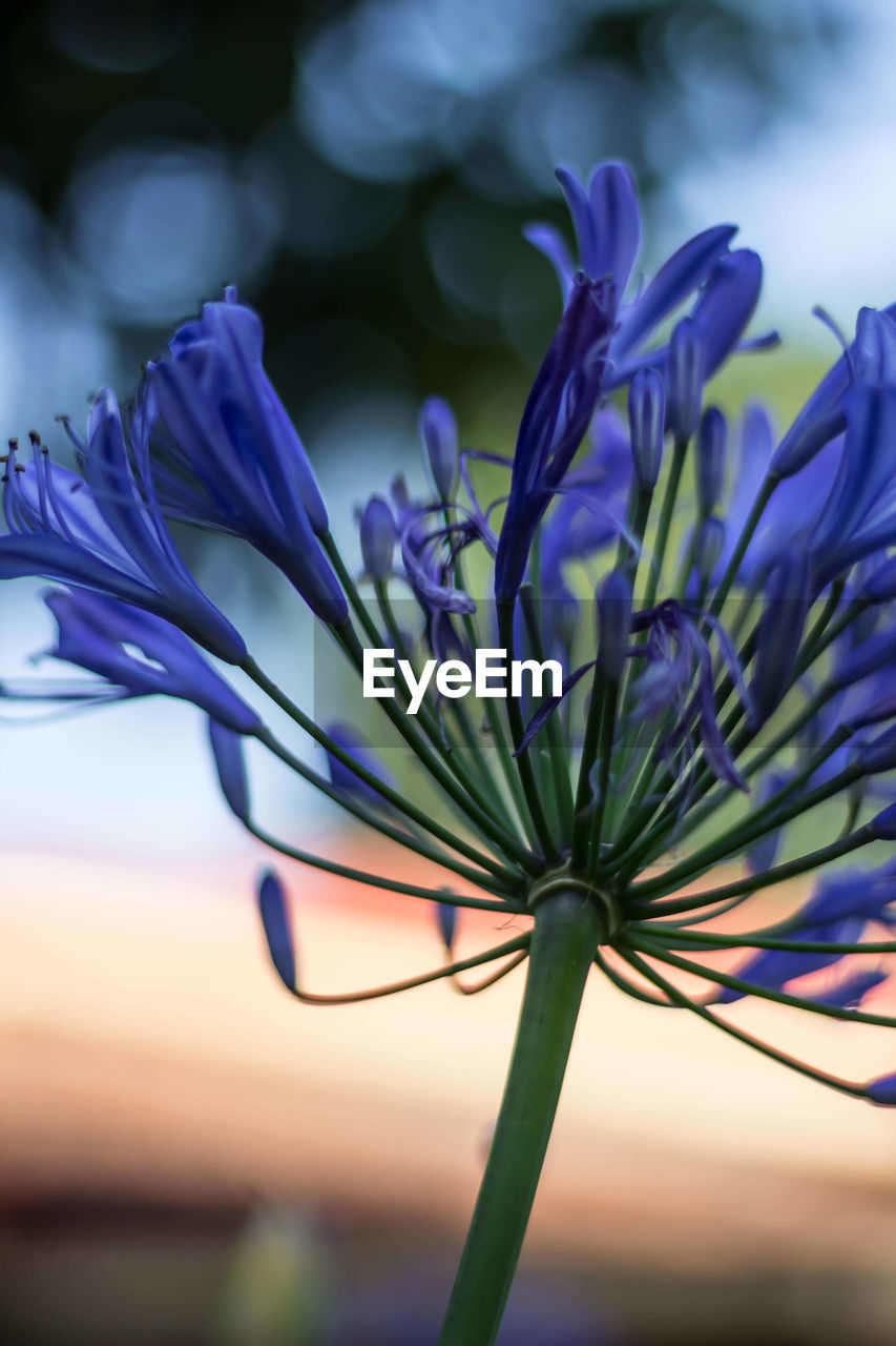 flower, fragility, beauty in nature, nature, growth, petal, purple, freshness, close-up, outdoors, day, plant, no people, flower head, focus on foreground, blooming