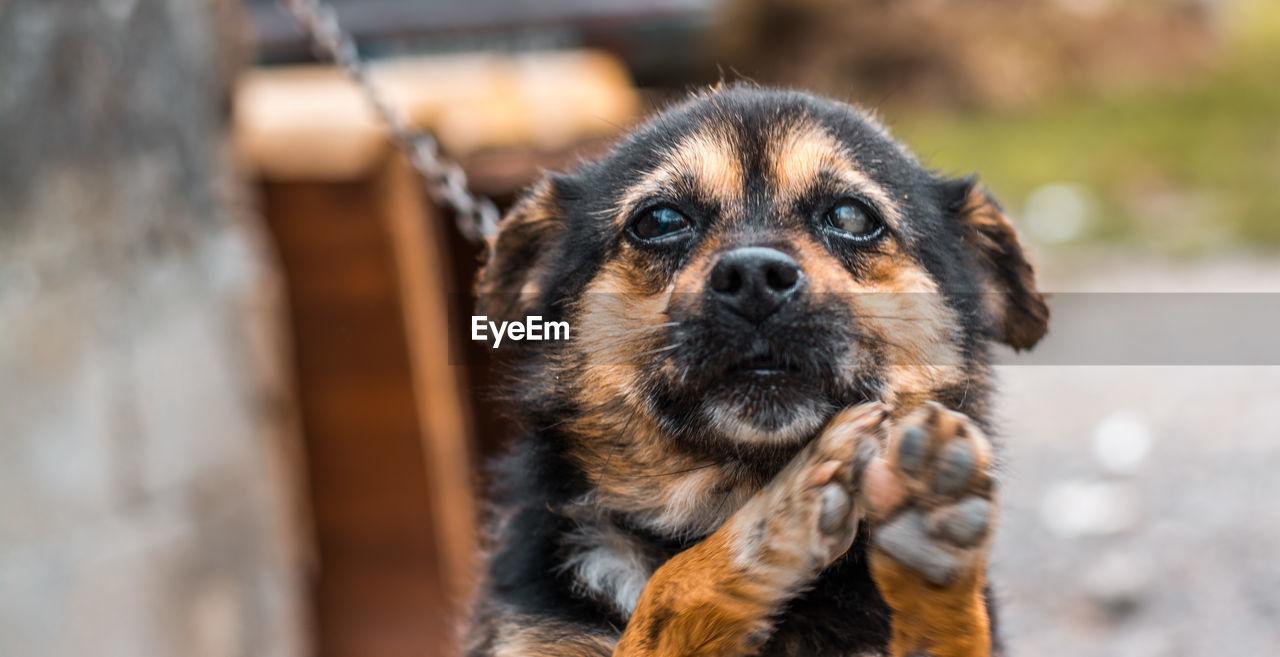 CLOSE-UP OF DOG AT ZOO