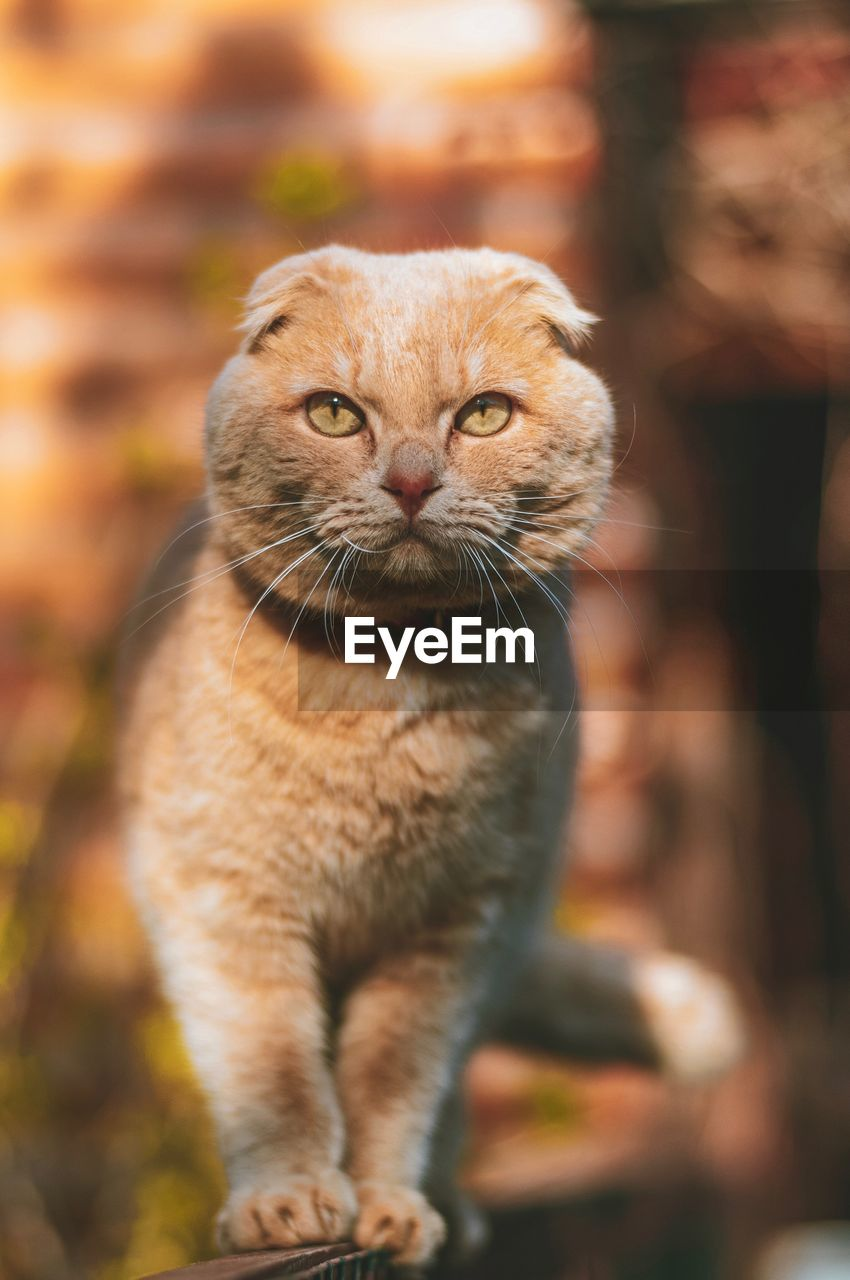 mammal, one animal, cat, domestic, pets, feline, domestic animals, domestic cat, focus on foreground, whisker, no people, vertebrate, looking, close-up, day, looking away, portrait, ginger cat, animal eye, tabby