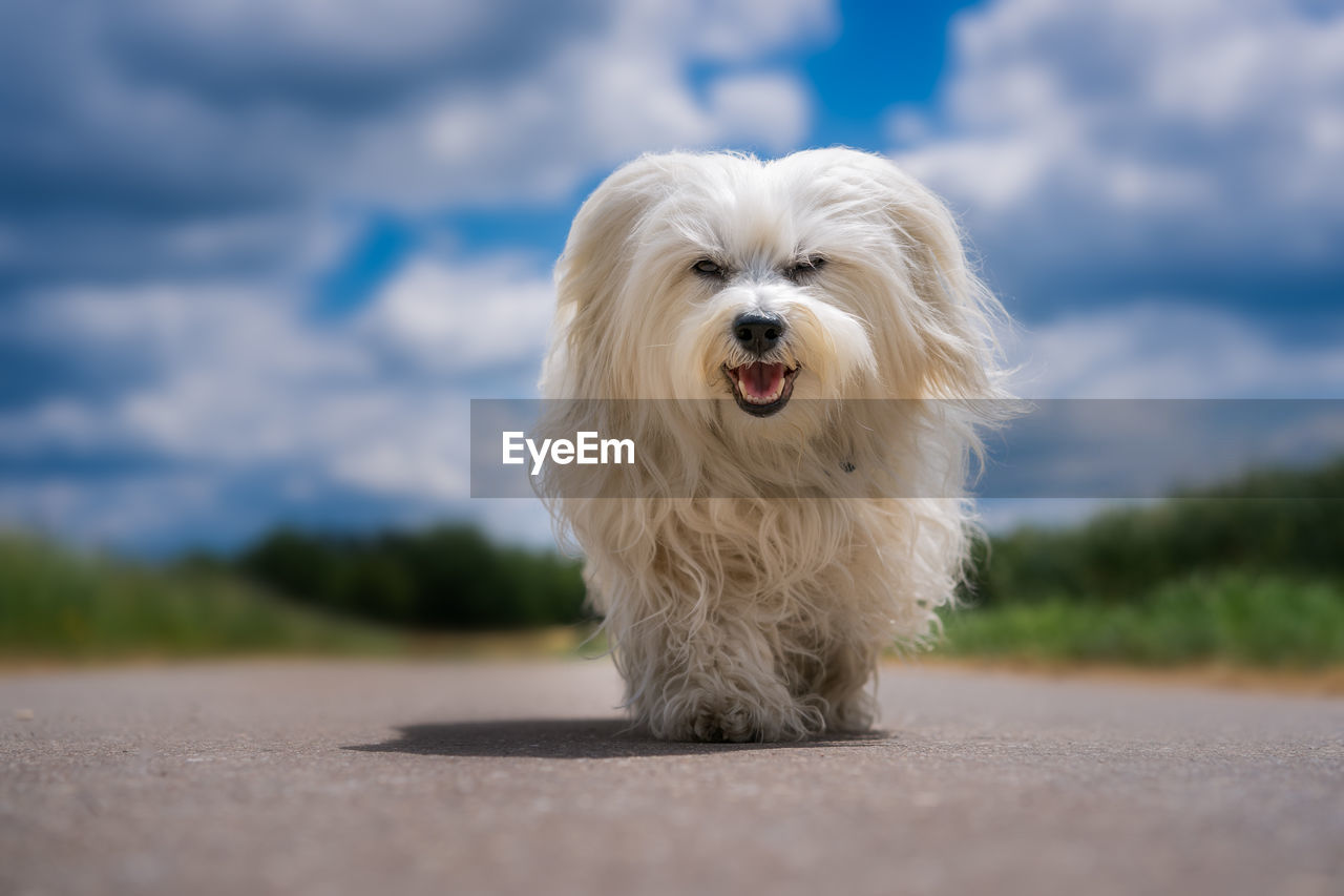 Portrait Of Dog Standing On Road Against Sky