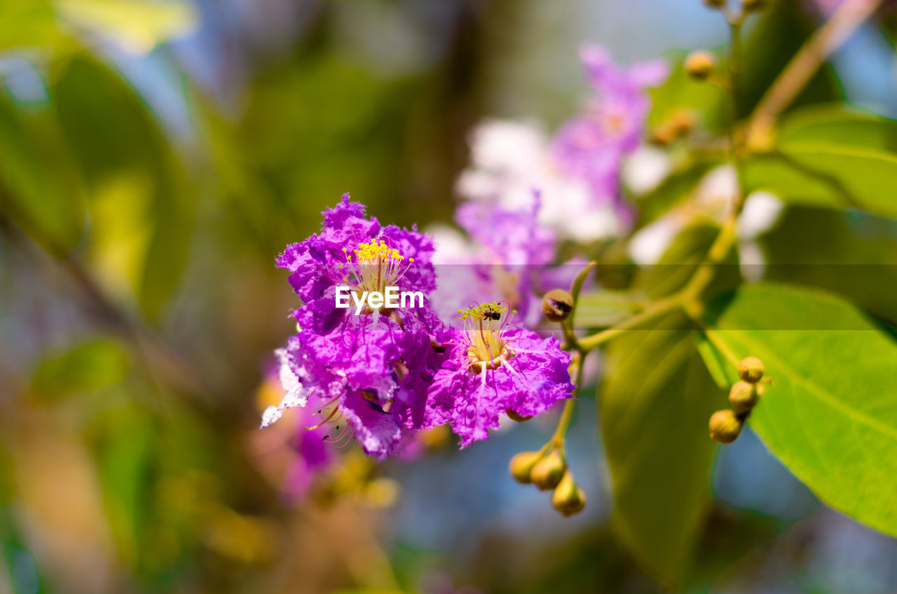 flowering plant, flower, plant, vulnerability, freshness, fragility, growth, beauty in nature, close-up, purple, petal, flower head, selective focus, nature, day, inflorescence, no people, plant part, leaf, botany, pollination