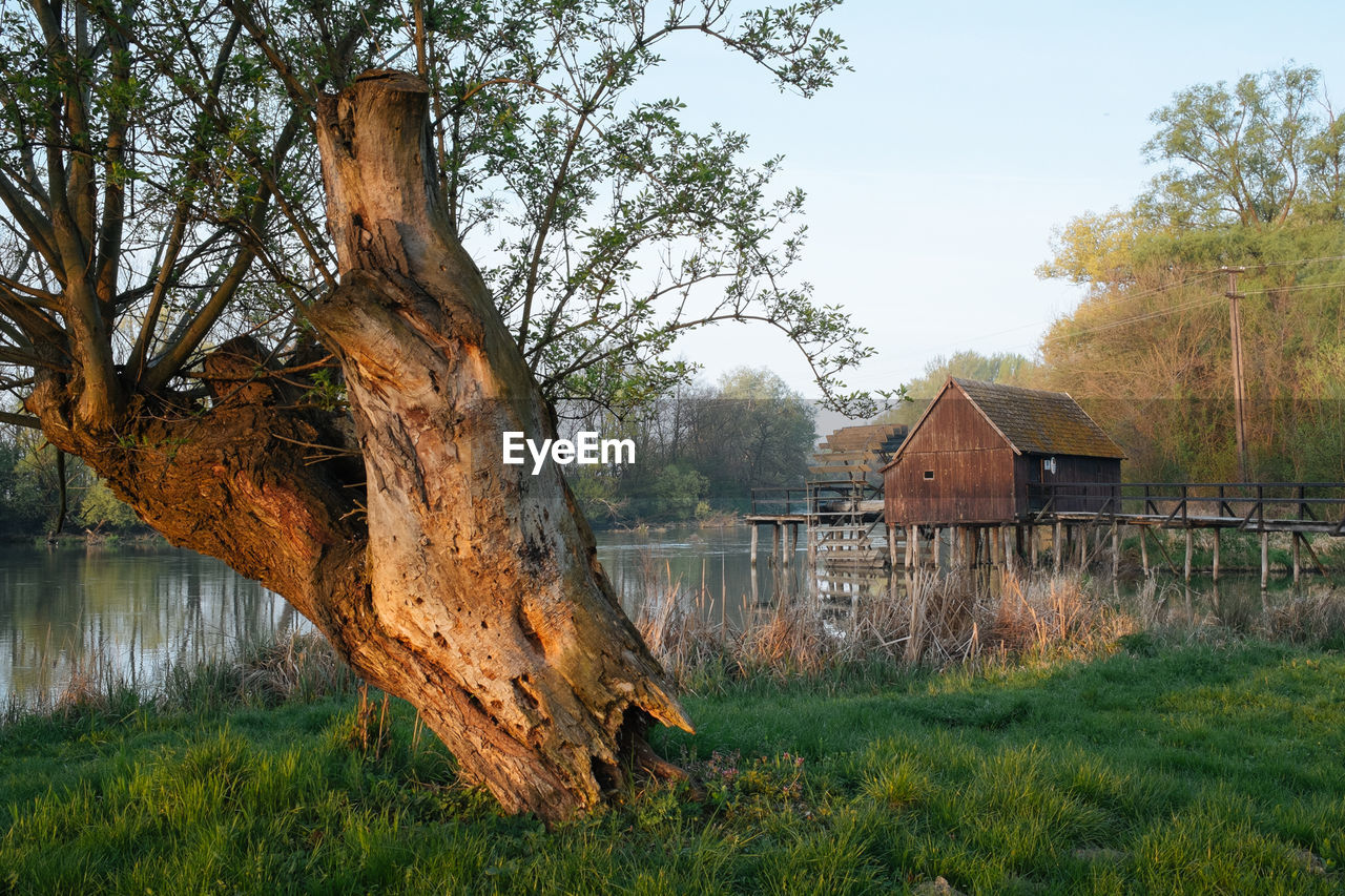 Tree On Grassy Field At Lakeshore And Wooden Stilt House At Lake