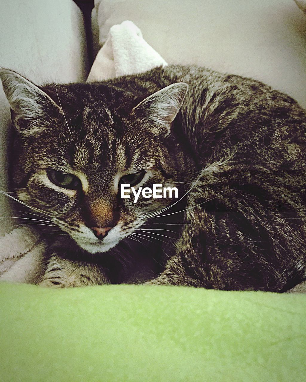 cat, pets, domestic, domestic cat, domestic animals, feline, mammal, one animal, animal themes, animal, relaxation, vertebrate, furniture, indoors, bed, sofa, no people, resting, close-up, lying down, whisker, tabby