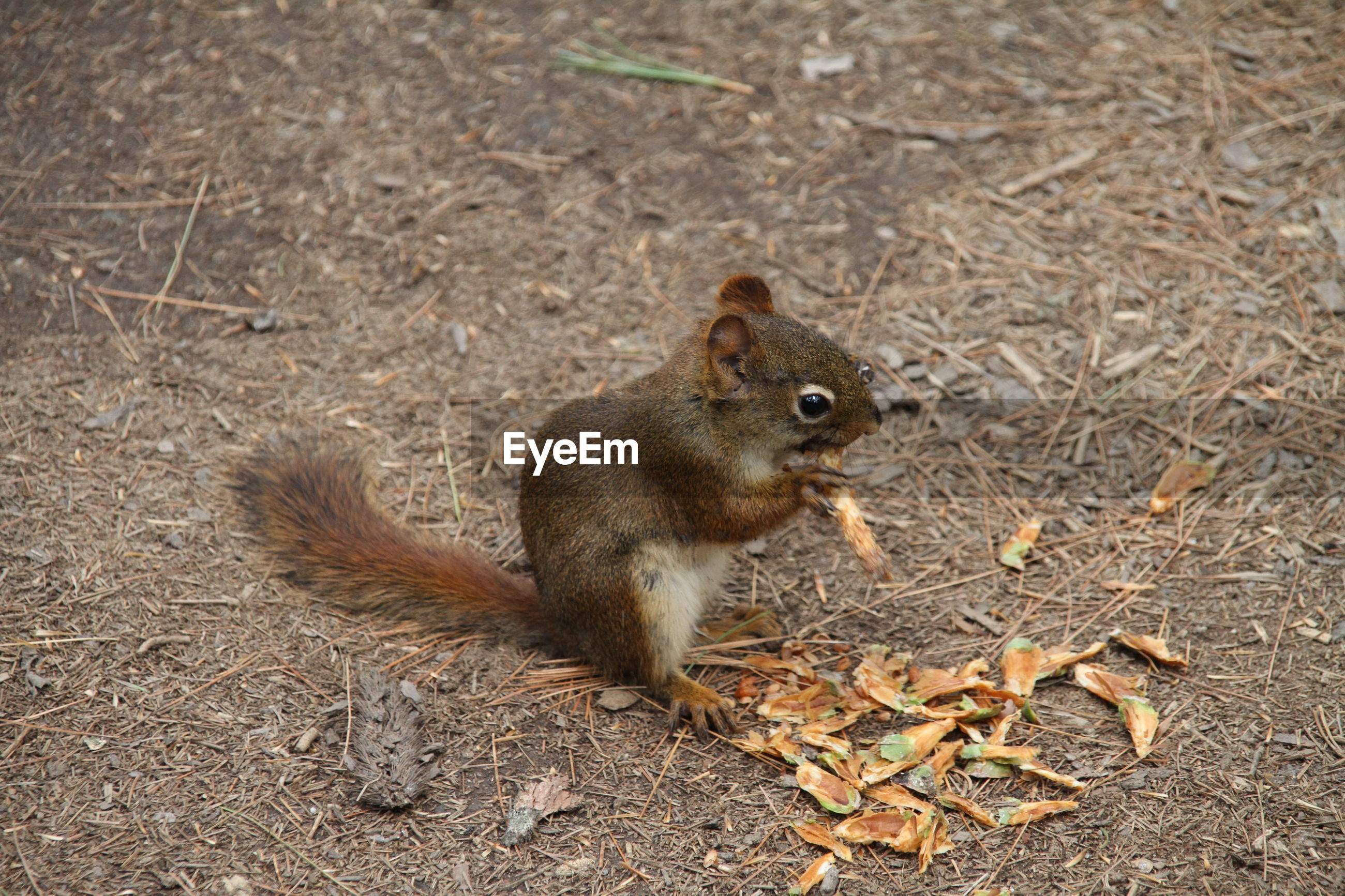 HIGH ANGLE VIEW OF SQUIRREL ON GROUND