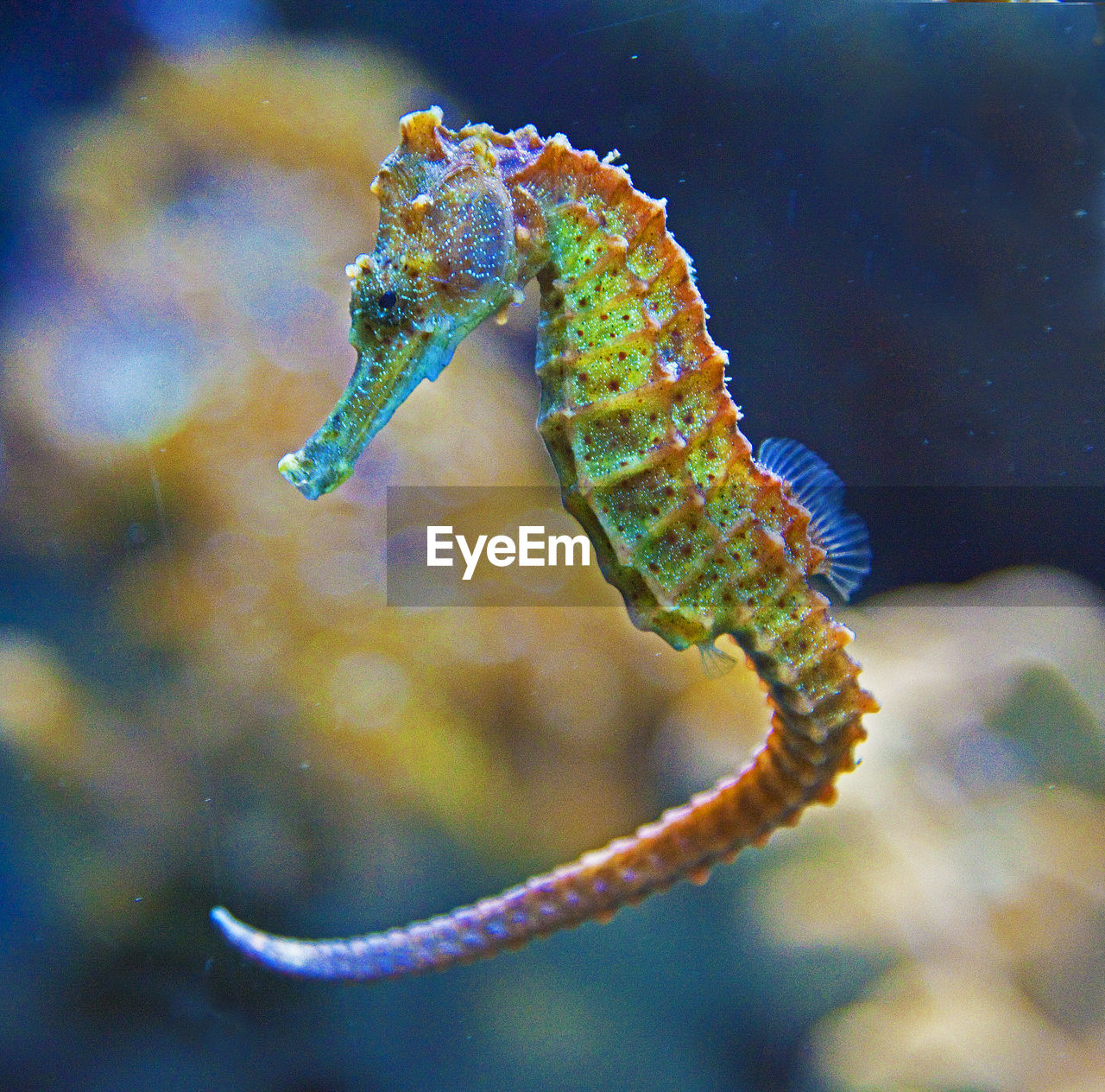 one animal, animal themes, animals in the wild, underwater, no people, animal wildlife, sea life, undersea, close-up, sea horse, water, sea, nature, outdoors, day