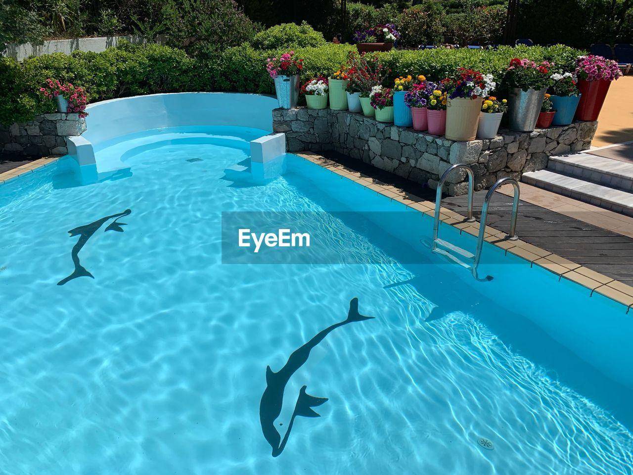 pool, swimming pool, nature, water, day, plant, no people, blue, front or back yard, absence, outdoors, chair, high angle view, waterfront, sunlight, swimming, turquoise colored, animal themes, animal, inflatable