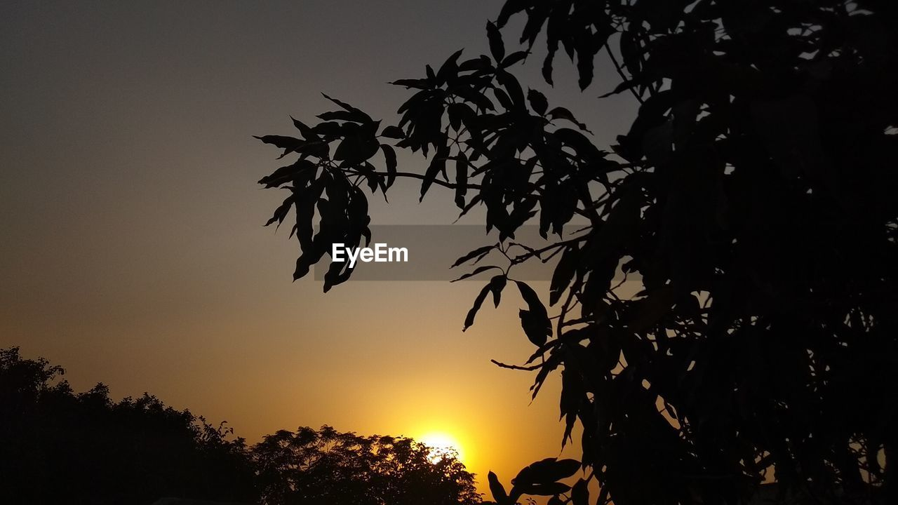 sunset, silhouette, sky, plant, beauty in nature, tree, growth, tranquility, nature, scenics - nature, orange color, no people, tranquil scene, outdoors, low angle view, branch, sun, plant part, leaf, non-urban scene