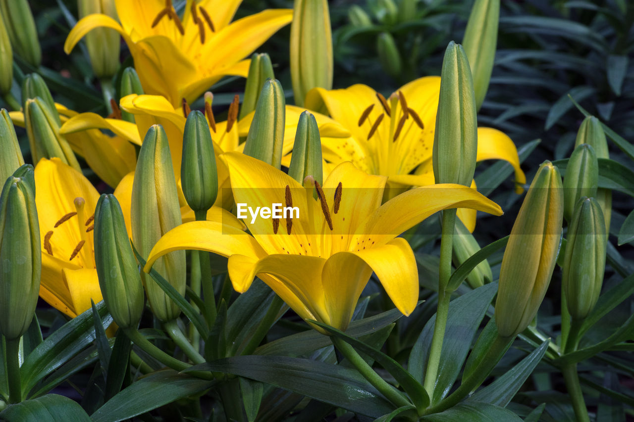 yellow, flower, flowering plant, petal, vulnerability, fragility, plant, growth, beauty in nature, flower head, freshness, inflorescence, close-up, day, nature, botany, no people, springtime, outdoors, focus on foreground, pollen