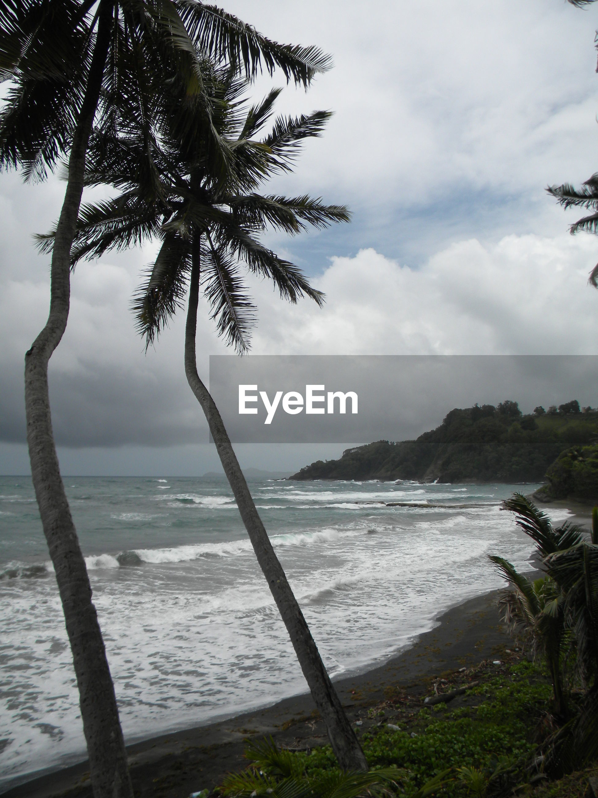 SCENIC VIEW OF SEA WITH TREES IN BACKGROUND