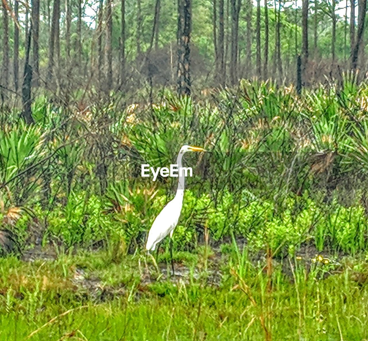 plant, animal wildlife, animal themes, animals in the wild, vertebrate, animal, one animal, tree, land, bird, forest, nature, grass, heron, day, green color, no people, growth, water, egret, outdoors