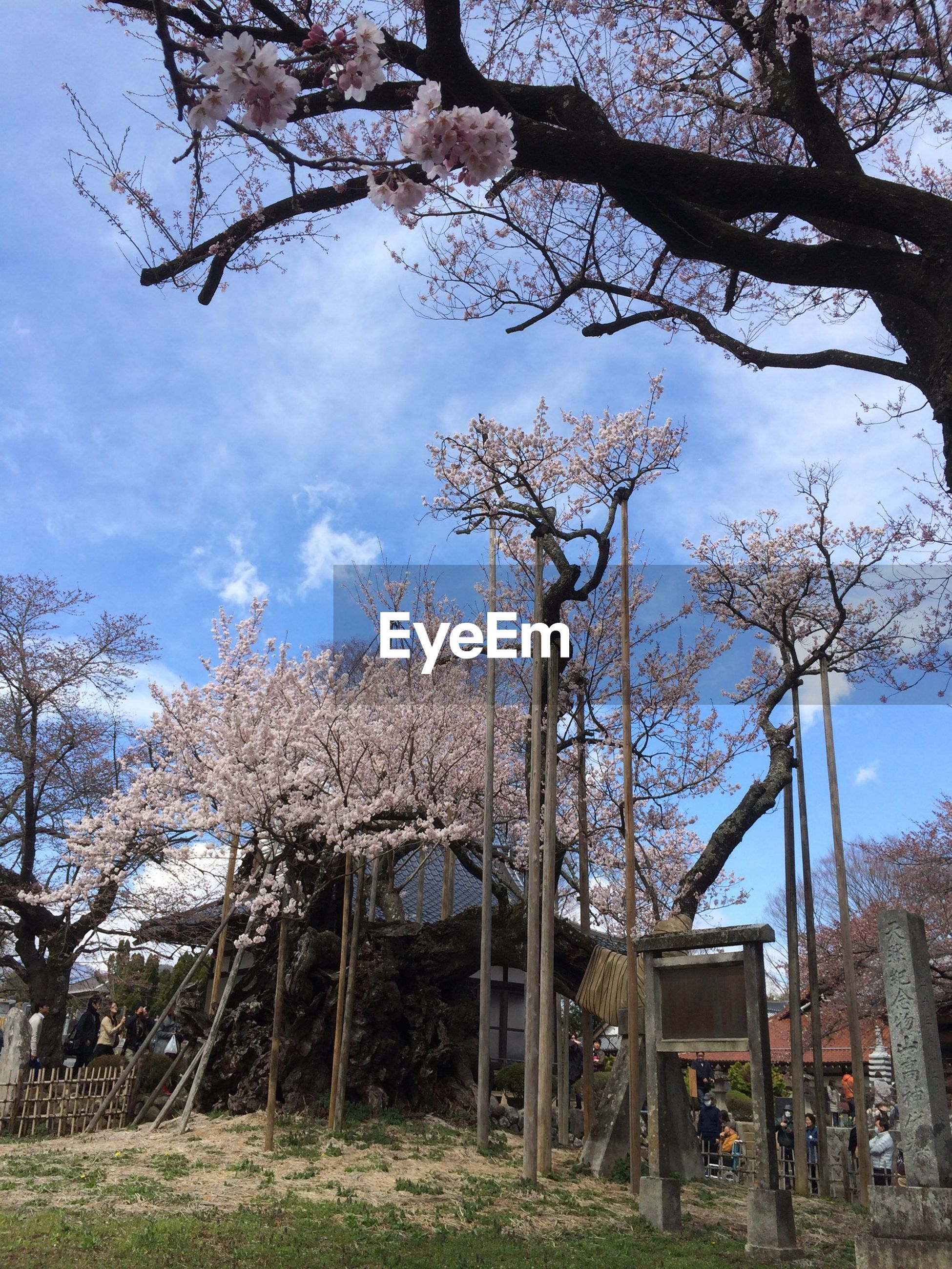 building exterior, built structure, architecture, tree, sky, bare tree, branch, house, low angle view, growth, day, residential structure, tree trunk, outdoors, nature, no people, residential building, field, old, grass