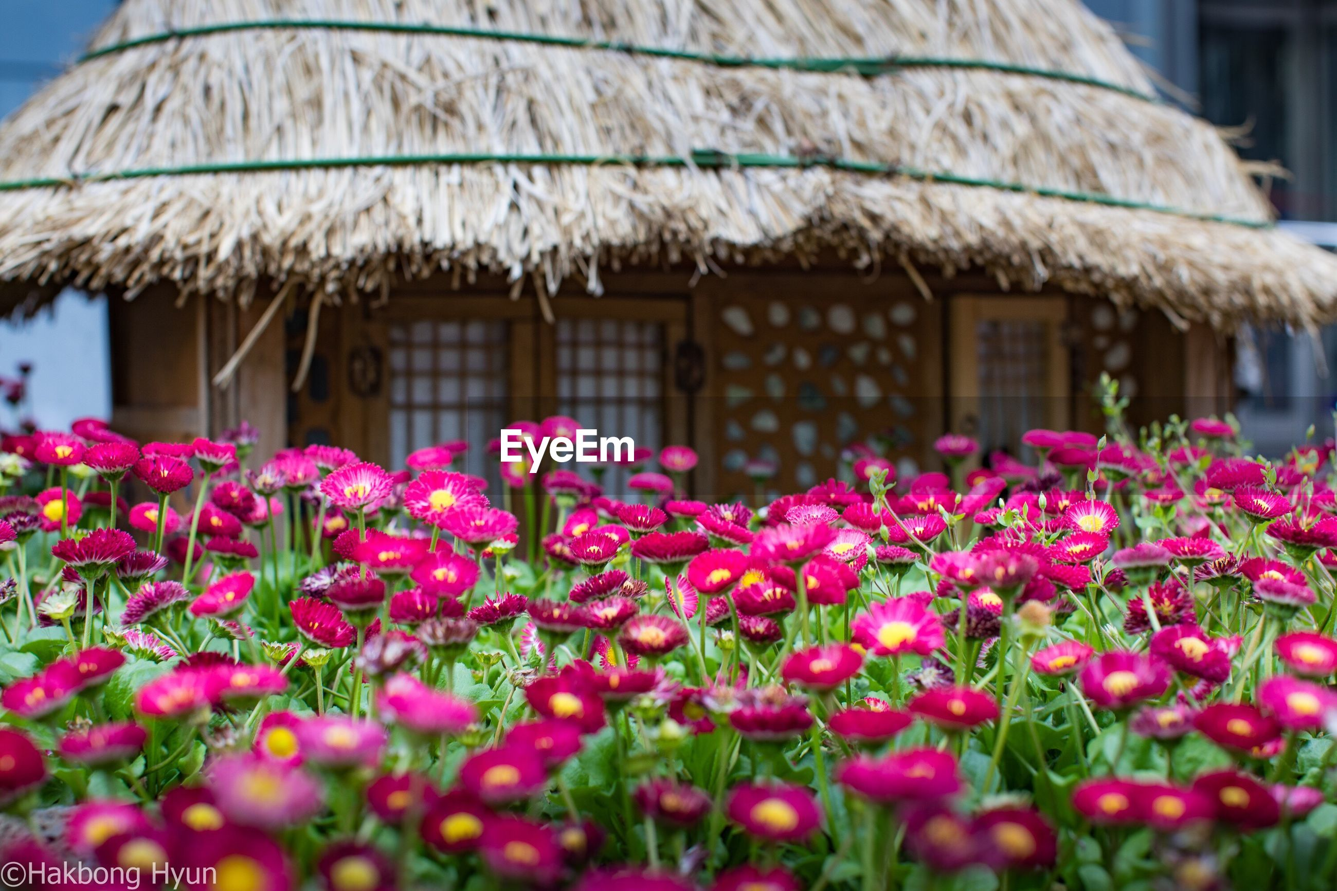 flower, growth, outdoors, beauty in nature, nature, building exterior, freshness, architecture, day, built structure, plant, fragility, no people, close-up, flower head