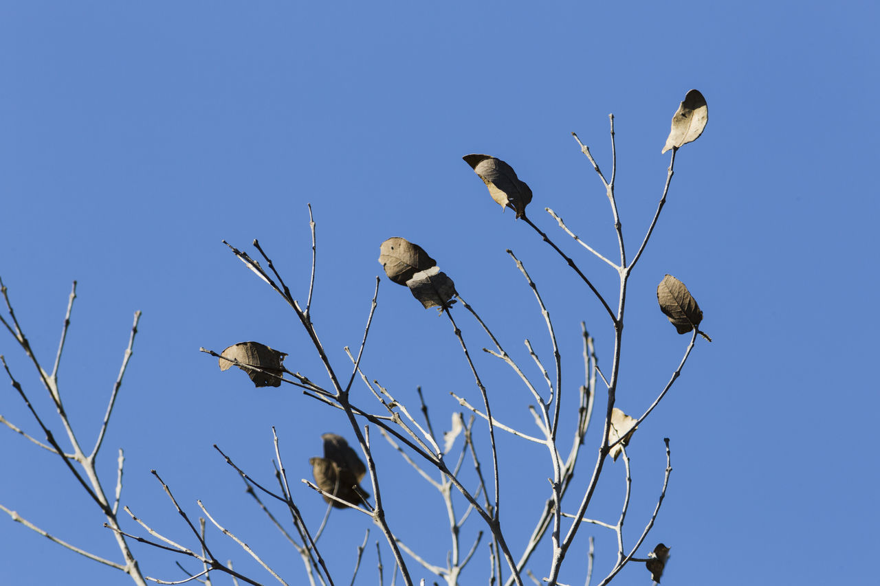 sky, low angle view, clear sky, blue, animal themes, animal wildlife, plant, bird, animal, no people, animals in the wild, vertebrate, nature, day, group of animals, tree, branch, beauty in nature, perching, copy space
