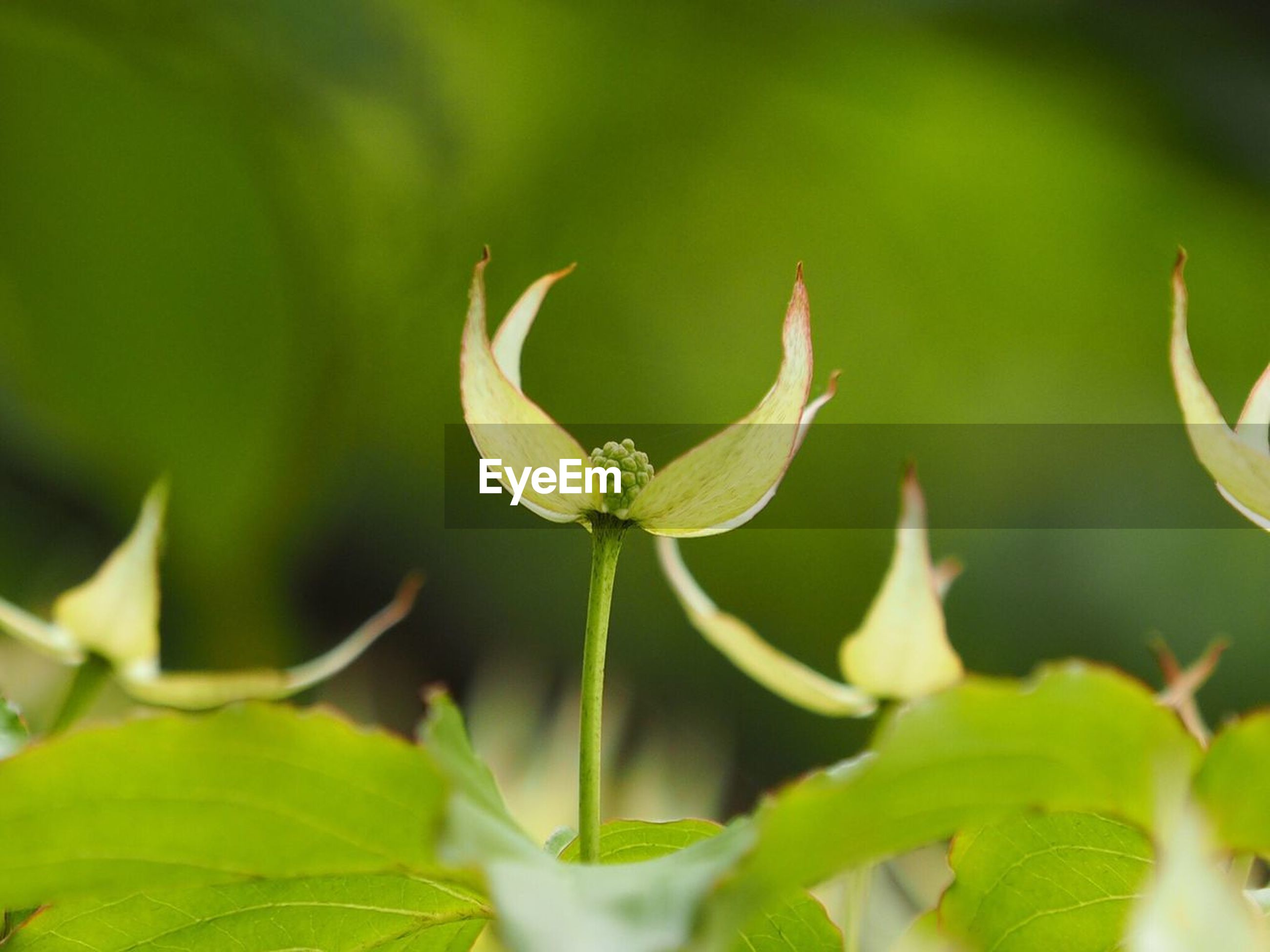 leaf, growth, close-up, focus on foreground, plant, green color, freshness, fragility, nature, flower, beauty in nature, selective focus, stem, bud, petal, new life, outdoors, day, botany, beginnings