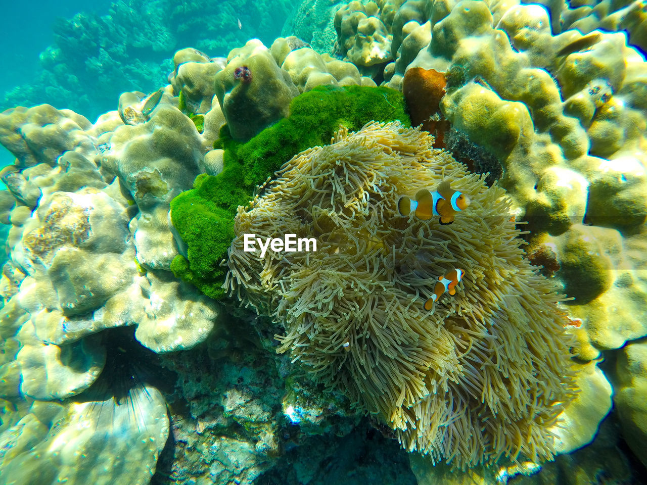 underwater, undersea, sea life, sea, coral, water, animals in the wild, animal themes, reef, nature, no people, beauty in nature, animal wildlife, swimming, clown fish, sea anemone, close-up, scuba diving, day