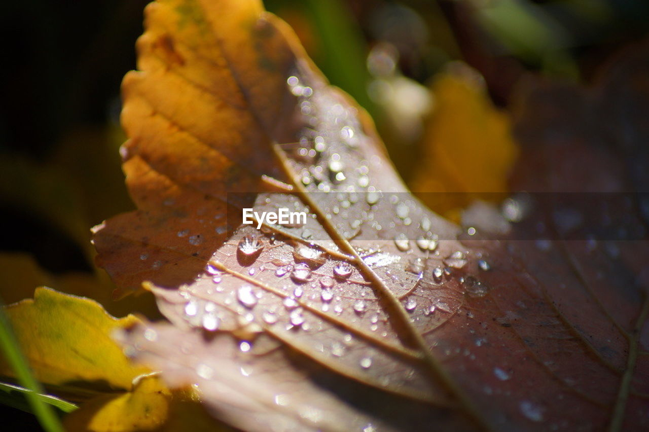 drop, water, leaf, nature, wet, close-up, beauty in nature, no people, day, raindrop, outdoors, fragility, freshness