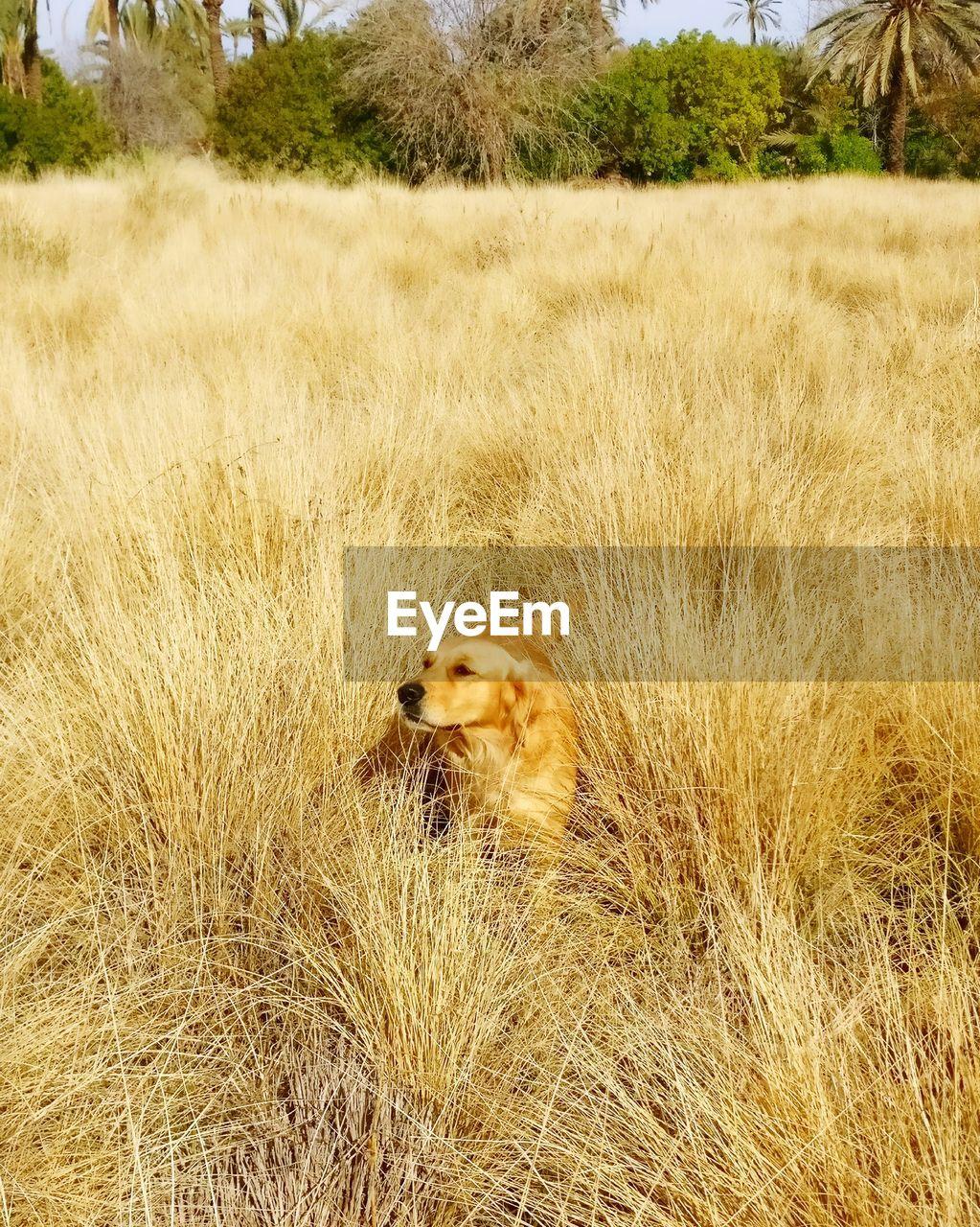 grass, plant, animal, one animal, animal themes, mammal, land, nature, field, no people, day, vertebrate, animal wildlife, pets, feline, cat, animals in the wild, tree, domestic animals, lion - feline, outdoors