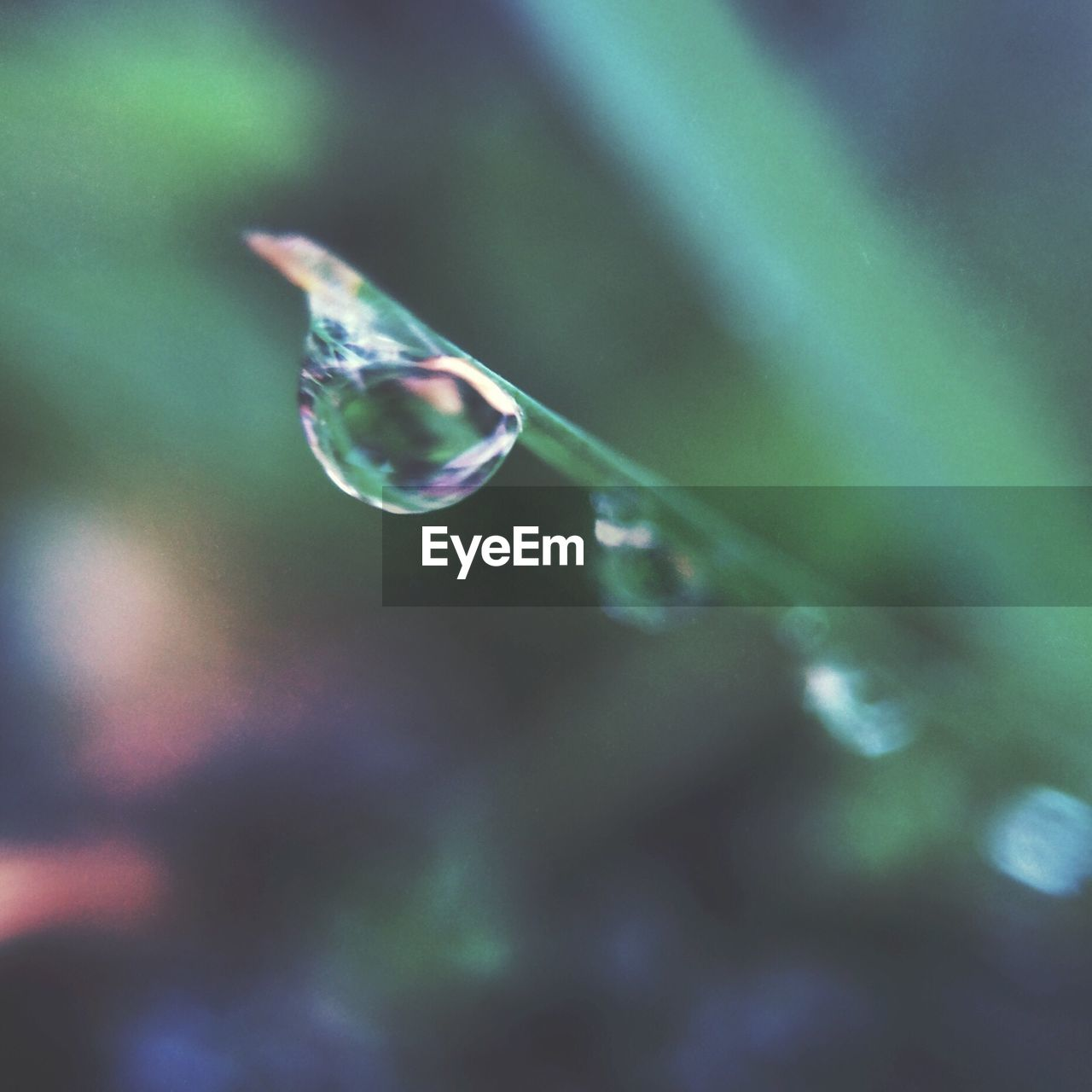 drop, bubble, fragility, water, nature, focus on foreground, beauty in nature, wet, selective focus, raindrop, no people, purity, mid-air, close-up, day, rainbow, outdoors, refraction, bubble wand, spectrum, dripping, freshness