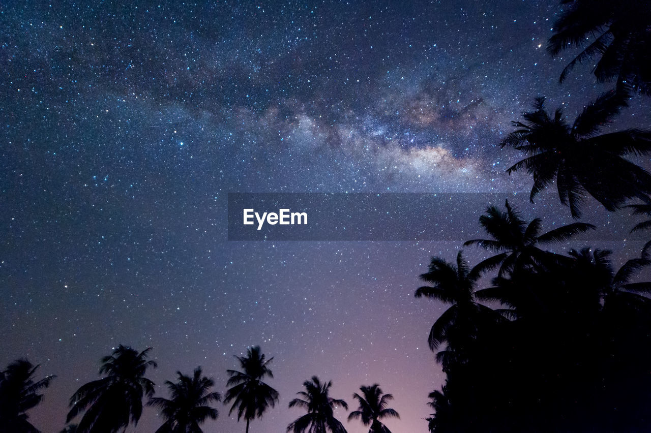 tree, sky, night, palm tree, space, plant, silhouette, star - space, scenics - nature, beauty in nature, nature, no people, astronomy, tropical climate, low angle view, tranquility, growth, galaxy, milky way, tranquil scene, outdoors, coconut palm tree