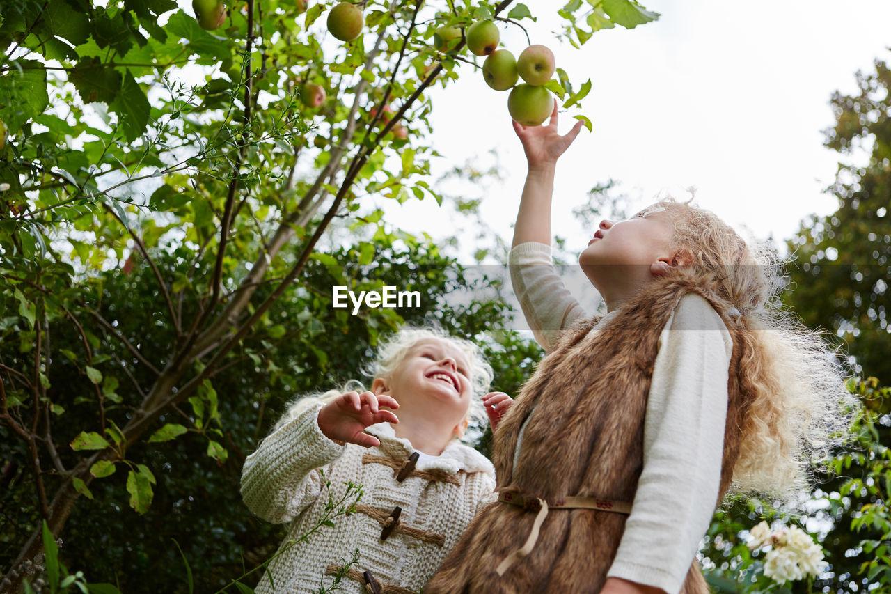 Friends Reaching Fruits Growing On Tree