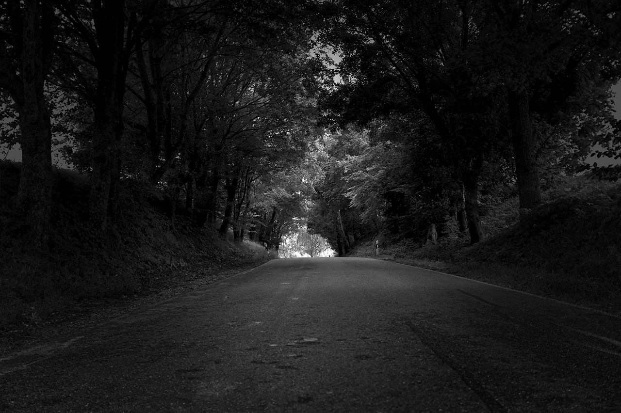 direction, tree, the way forward, road, transportation, plant, diminishing perspective, no people, nature, forest, vanishing point, tranquility, land, day, tranquil scene, outdoors, sign, street, empty road, empty, long